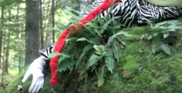 Vidéo : 2011, L'après-midi d'un zèbre